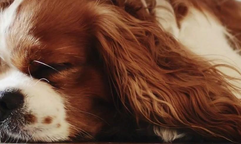 La banda del cane Chiosco suona il rap: c'è lui sul set del nuovo video di DonGocò