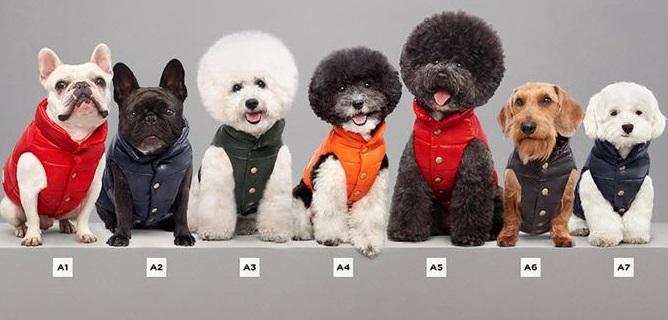 Per l'inverno il cane va di moda, c'è la collezione di piumini tutta per lui