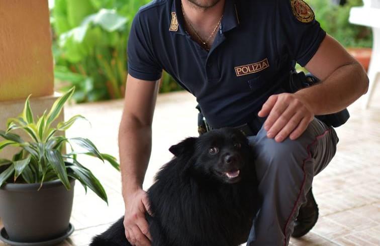 Il cane Matisse da trovatello a mascotte della questura di Palermo