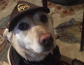Cani, i migliori amici dei portalettere. Per loro una pagina Facebook