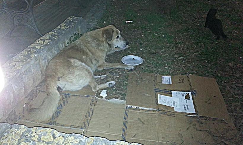 Via le cucce dei cani di quartiere Bianca e Biondo: e Galatone si ribella sul web