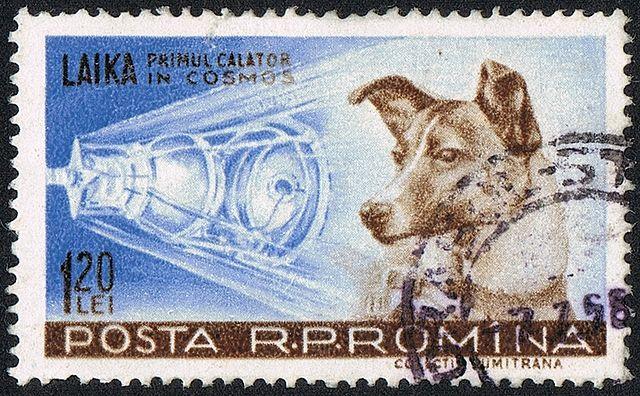 A Firenze un'area cani intitolata a Laika