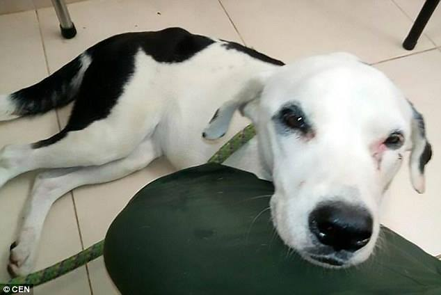Abbandonata in aeroporto, cagnolina si lascia morire dalla disperazione