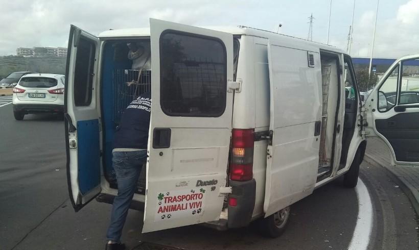 Furgoncino bloccato con a bordo 20 cani senza documenti: denunciate 8 persone