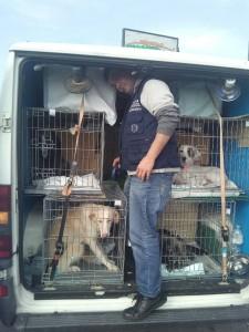 Le gabbie con i cani nel furgone fermato