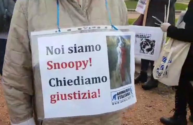Livorno in corteo per Snoopy, il cane ucciso sul balcone di casa sua