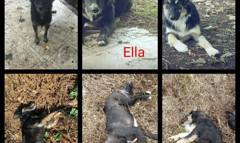 Tre cucciolotti morti avvelenati nella pineta di Palmi, erano Lola, Ella e Leo