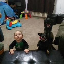 Tobi e Malo, bassotti in adozione sulla rotta di Colombo