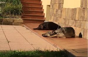 Liga e Zerbi nel loro nuovo giardino