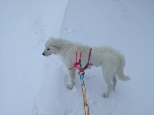 La cagnolina appena ricondotta a valle. Foto:  Sasl Cnsas (Facebook)