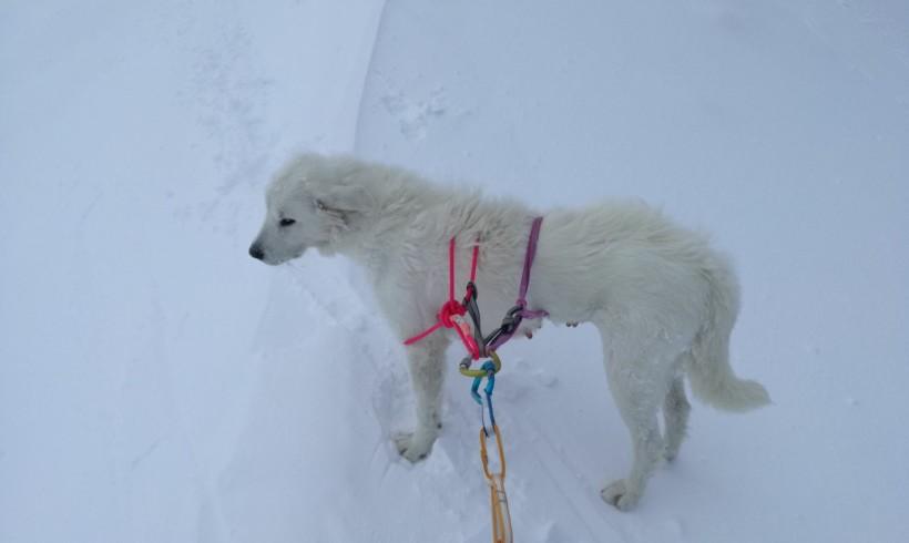 Cagnolina mezza ghiacciata resta intrappolata sul Terminillo: arriva il Soccorso Alpino