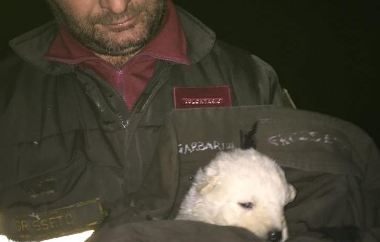 Cuccioli in una busta e poi nel cassonetto: morti quattro su cinque