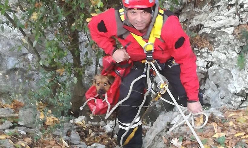Cuccioletto scivola giù per 50 metri, i pompieri lo recuperano direttamente in borsa