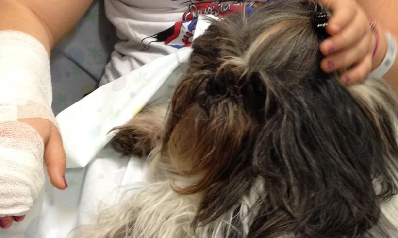 La terapia oncologica del mercoledì: scodinzolare. A Trento la pet therapy entra in corsia