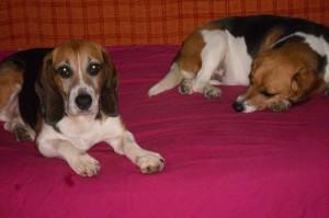 Lillo e Freedom sul divano