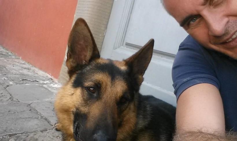 Pando sul Ponte, una vita col naso tra i banchi. Firenze saluta il suo cane antidroga
