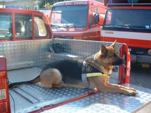Kira a bordo di un mezzo dei vigili del fuoco