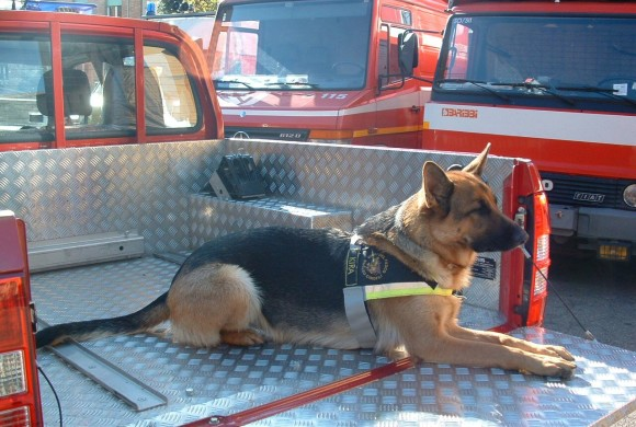 Kira, 11 anni di soccorso. I vigili del fuoco di Siena piangono il cane pompiere