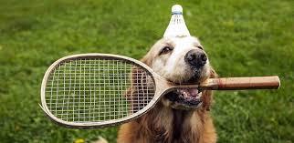 Dalla strada alla terra rossa: l'Open tennis di San Paolo mette in campo i cani raccattapalle