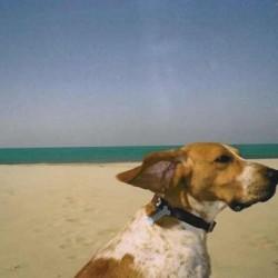 Noi andiamo in vacanza, ci vediamo a settembre con le nostre dognews!