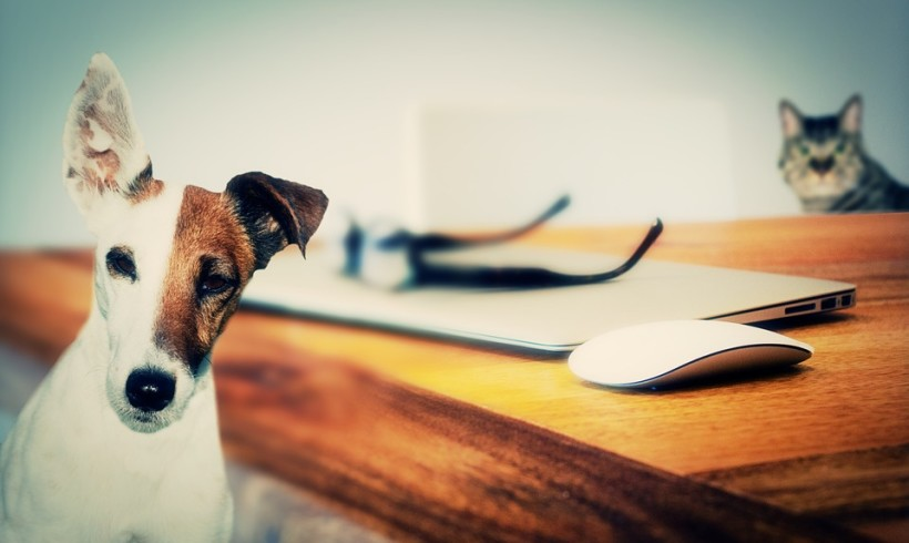 Protetti e DOGinformati con Qua la Zampa News