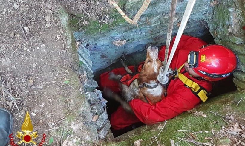 Passeggiate domenicali spericolate, vigili del fuoco in azione per salvare cagnolini pasticcioni