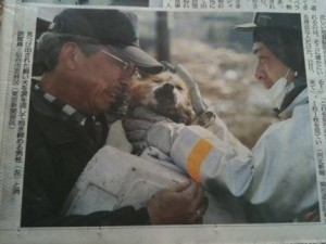 cane-terremoto-giappone