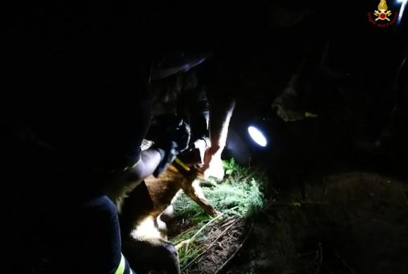 Rincorre l'istrice e si incastra nella tana: i pompieri salvano il cucciolo curioso