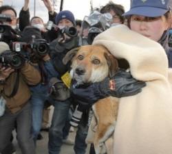 Col cane nelle calamità naturali: in Giappone il governo diffonde linee guida