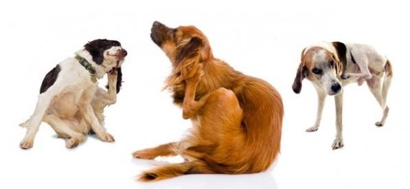 Allergie, è boom per i cani di città. Ma ora c'è la app