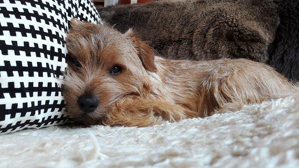 Giallo a corte, muore avvelenato il cagnolino della principessa Beatrice di York