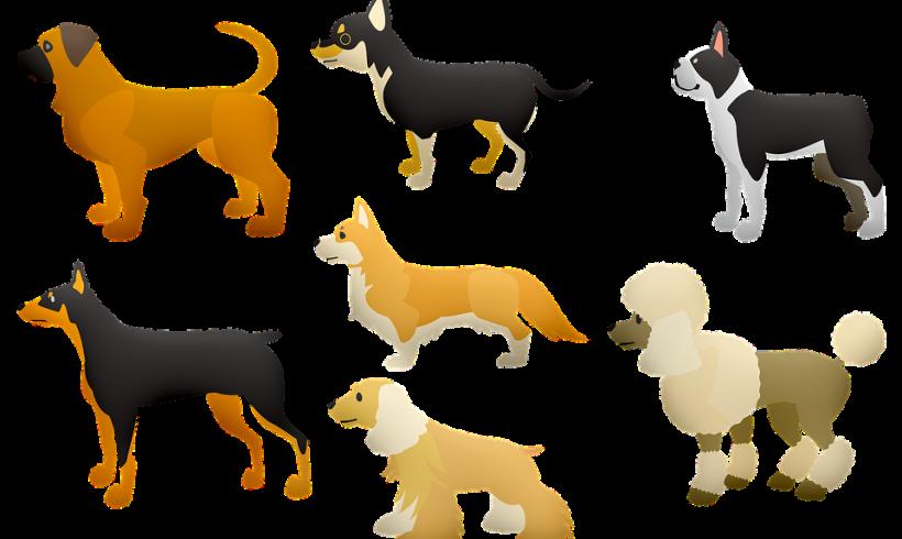 Che DOG significa? Lessicario cinofilo: il garrese