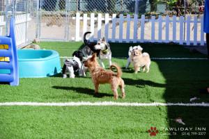 Il dog sitter può anche solo tenere compagnia al cane
