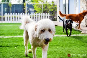 Anche giocare può far parte delle mansioni di un dog sitter