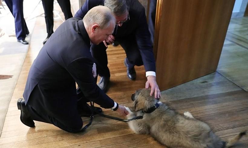 Cani premier adottati o in dono, nuovi amici con la coda per Juncker e Putin