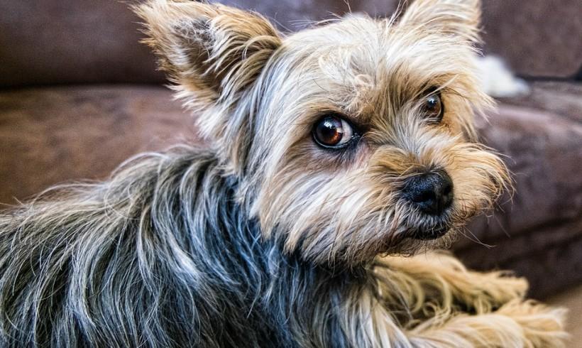 Cane e muore di stenti col suo proprietario: la triste fine di Vittorio Mazzucato. Il corpo trovato accanto alla cuccia dell'amico a quattro zampe