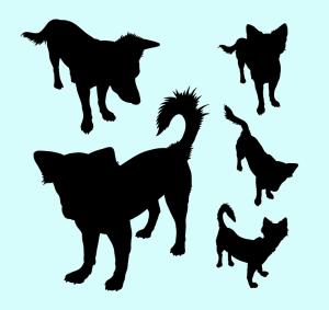 coda-cani