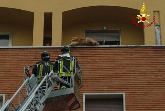 A zonzo sul parapetto del terrazzo, cane bloccato sul cornicione