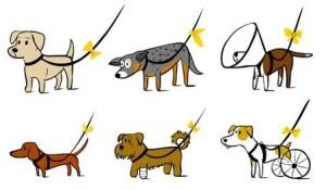 mille-motivi-per-chiedere-piu-spazio-the-yellow-dog-project_facebook