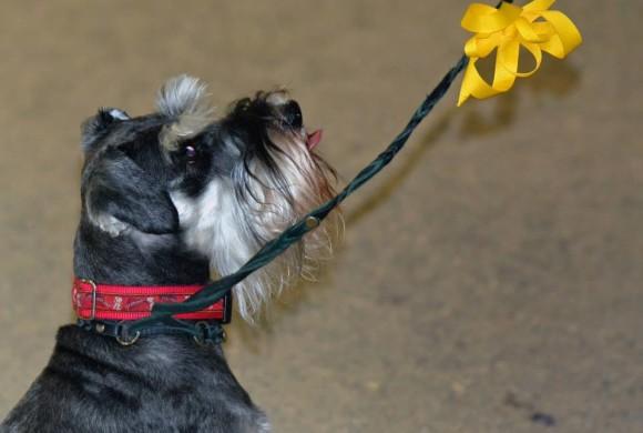 Il cane speciale? Ha il fiocchino giallo!