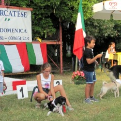 I cani d'oro sfilano a Vimercate: giunge alla XV edizione il Golden Dog di Moldora. Si premia anche il cane 'Panzarotto'