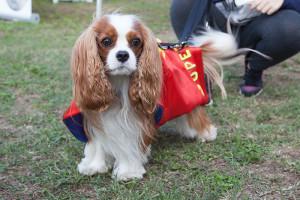 superdog-mph-my-pet-hero