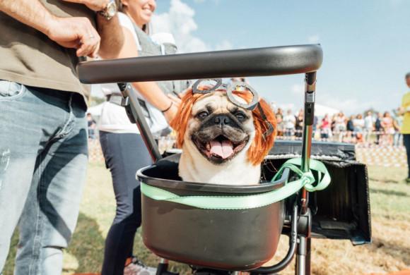 Le Ugopiadi fanno 16 e raddoppiano: due le giornate all'insegna del cane carlino