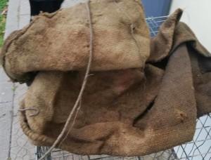 Il sacco e il cappio che stavano per segnare la fine dei due cagnolini