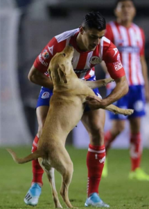 cane-calcio-messico