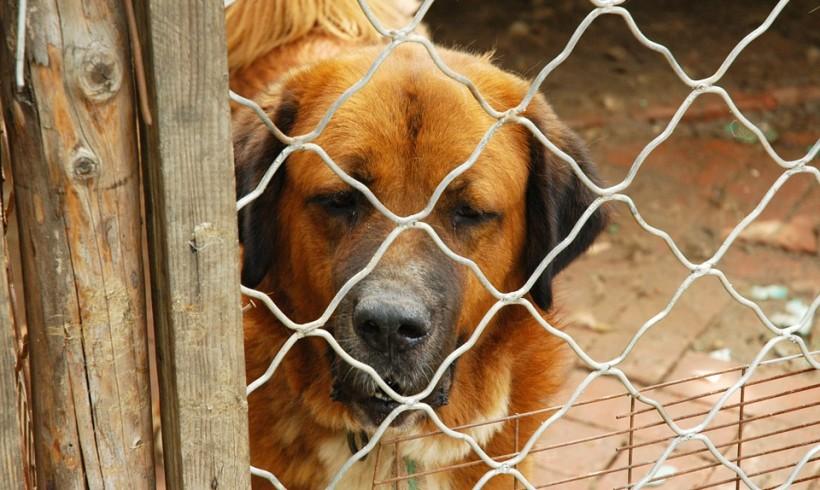 Canile di Diecimo, Marchetti (FI): «Lo stop al servizio si avvicina, si mettano in sicurezza i cani ospiti entro fine mese». E da U.N.A. parte la campagna adozioni