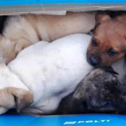 Molla quattro cuccioli per strada nello scatolone: 79enne beccato dai Carabinieri e denunciato per abbandono