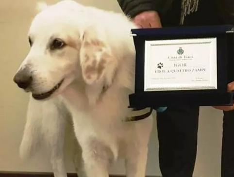 Salva un infartuato, per il cane Igor la targa al merito di Trani