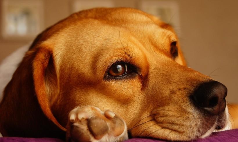 Senza il suo cane, sordomuto perde la testa e chiama i carabinieri