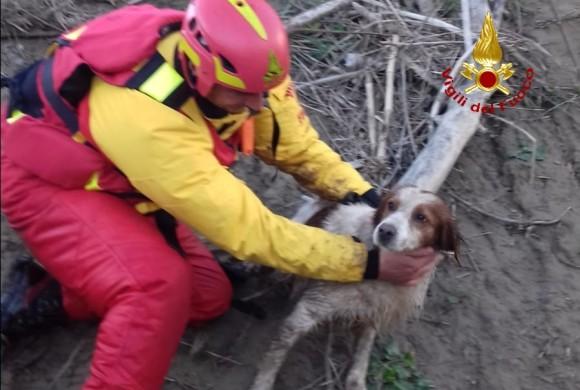 Precipita nel fiume e lo trascina la corrente, per il cane arrivano i pompieri